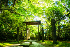 the gate (Tenju-an temple, Kyoto) (Marser) Tags: xt10 fujifilm raw lightroom japan kyoto temple gate green pavement lowangleview verdantleaves 京都 南禅寺 天授庵 新緑