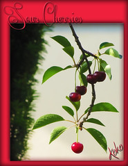 Sour Cherries (Koko Nut, it's all about the frame) Tags: cherry sour sourcherry cherries dangling red green leaves fruit colourful tree vienna koko kokonut wonder