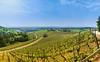 Panorama Offenburg (Real_Aragorn) Tags: panorama offenburg weinberg vineyard