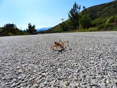 Be careful my friend (panoskaralis) Tags: bugs insect roadtrip road green nature macro lesvos lesvosisland mytilene greece greek hellas hellenic outdoor landscape nikon nikoncoolpixb700