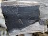 Black chert nodule (Delaware Limestone, Middle Devonian; Emerald Parkway roadcut, Dublin, Ohio, USA) 1 (James St. John) Tags: delaware limestone devonian emerald parkway dublin ohio roadcut chert nodule nodules