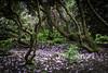 seleger moor-7709 (ver.sus) Tags: selegermoor moor plants rhododendron park pflanzen seleger