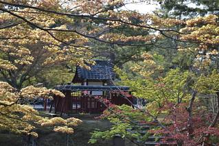 Tōdai-ji - Nara