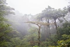 2018-03-06-0014059 (hal.chen) Tags: monteverde provinciadepuntarenas costarica cr
