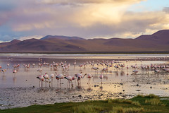 Touched by twilight (khandozhkoa) Tags: nature naturephotography landscape landscapesdreams lowlight twilight handheld fullframe colors colorful sony sonyalpha 35mm a7riii 24105g bolivia travelphotography