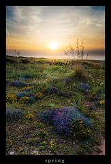 spring (Rukiber) Tags: mallorca spanien spain landschaft landscape urlaub holiday christian kirsch rukiber d750 natur nikon