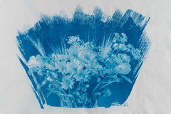 Flowerpot (drugodragodiego) Tags: cianotipia cyanotype art flowers ciano blu washi paper pentax pentaxk1 k1 sigma35mmf14dghsma012 sigma35mmf14artseries sigma negativodigitale digitalnegative