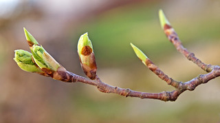 Searching for signs of Spring in Stockholm - tree branches