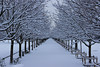 Perspective (StephanExposE) Tags: paris iledefrance france stephanexpose neige snow city parc park tuileries jardindestuileries arbre tree canon 600d 1635mm 1635mmf28liiusm