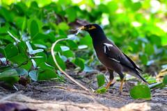 CSC_3745-1 (Anton Danilov) Tags: bird travel nikon d3100
