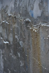 Wall Art (I) (Bad Alley (Cat)) Tags: toronto wall grey old weathered stained yellow white peeling paint abstract rosedale