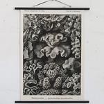 Hard Corals #69 thumbnail