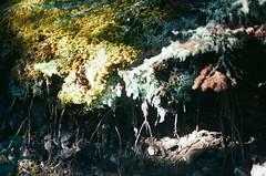 Cnd-11 (Tanit | buyitinpacks) Tags: 35mm canonae1 canada roadtrip hike nature tree film kodakportra160