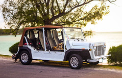 Moke (Fifinator) Tags: moke dogs dog product portrait bahamas carribean sunset brown white car road
