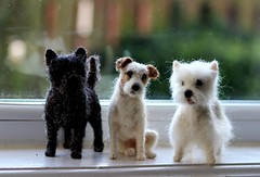 brighton dogs -terrier trio (adore62) Tags: brightondogs2018 feltedfido felteddog felted needlefelted needlefelteddog westie cairn terrier jackrussell
