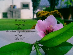 I dream... (camaee29) Tags: flowers spring peach pink outdoors selective focus close up branch in bloom petal flower sky fragility growth nobody peachflower pinkflowers🌸 quotes leaves green dream lawn grass closeup macro flowerscolors motivation free quote inspirational letter board humor