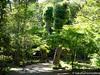(takafumionodera) Tags: em1 mishima olympus omd park rakujuen shizuoka tree 三島 公園 木 楽寿園 静岡