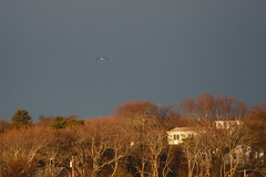 P5010520 (Paul Henegan) Tags: 32crop beltane montaukny earlymorninglight gull houses sky spring trees fb