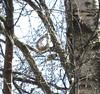 IMG_0539 (Marko_J_Aho) Tags: birdnest helsinki pussitiainen vanhankaupunginlahti