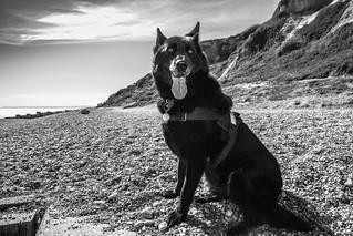 Roxy on the beach!