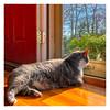 Sunshine Boy (Timothy Valentine) Tags: 2018 sunshine 0518 reflection cat happycaturday quinnomannion springtime home eastbridgewater massachusetts unitedstates us