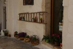 IMG_2825 (psn photo guy) Tags: ostuni italy flowers ladder