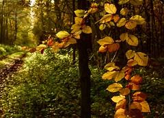 Waldromantik (lotharmeyer) Tags: lotharmeyer blätter wald herbst natur nikon trees