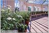 The Temperate House Kew (Antirrhinum) Tags: kewgardens kew royalbotanicgardens