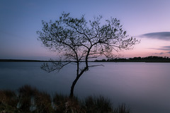 Colliford Lake (Dom Haughton) Tags: bodminmoor bodmin colliford collifordlake lake tree lonely evening bluehour cornwall wilderness kernow outdoor nature spring