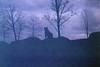 (martine.es) Tags: lion lioness emmen wildlands wild zoo animal grain grainy grainisgood filmphotography film filmneverdies filmcamera filmphoto purple cat bigcat crossprocess crossprocessed xpro slidefilm filmlove filmdestroyers filmisnotdead nofilter 35mm 35analog 35mmanalog 35