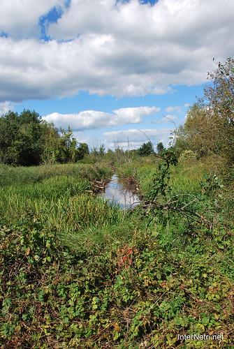 Волинське болото InterNetri Ukraine 17