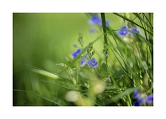 Awesome nature and flowers .. (Julie Greg) Tags: flower nature grass park colours canon5dmarkiv