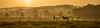 Wild Wild West Herts (p.g604) Tags: landscape 20180506imgp2842edit home county dawn hues horses equestrian centre hertfordshire layered horizon sunrise oranges greens mist hills trees pentax k1 wideangle panorama