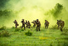 180510-M-DN694-1126 (United States Marine Corps Official Page) Tags: 16 bsrf181 bulgaria marines pex patrolling bg
