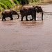 Elephant group passing the river