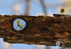 in focus... Spring (firstlookimages) Tags: outdoors spring trees decay newgrowth wildlife wildlifeportraits birds artistic artisticmanipulation digitalmanipulation digitalphotography detail colorful nature natureportrait naturephotography