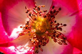 La primavera ... i suoi fiori ed i suoi profumi /Spring ... its flowers and its perfumes