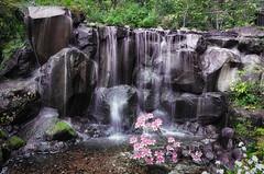 Water Garden in Japan (jnhPhoto) Tags: flowers garden water waterfall japan longexposure jnhphoto coolpixa