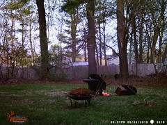 WGI_3218 (scottmcon) Tags: mama bear birdfeeder takedown may 2 2018 mother two cubs solor last years august yearling april 27 separate days