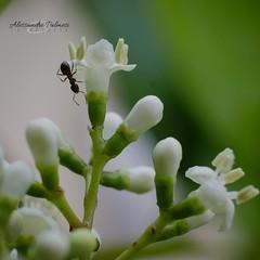 Bugs Life 2 (AlexBlues) Tags: ant spring bugs bugslife fujinon60mm fujifilmxe2s macro