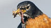 The Importance of a Varied Diet (photosauraus rex) Tags: bird feed diet food squigglybits