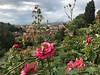 Florence (Daria P) Tags: firenze piazzale michelangelo florence italy rose