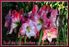 KunMothersDayFlower_9022 (bjarne.winkler) Tags: hikari sensei kun master light happy mother's day all lovely mothers out there