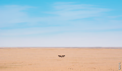 Mongolian Gobi Desert... (N.Batkhurel) Tags: season spring sky clouds landscape mongolia monrailpic khentiy gobi desert ngc nikon nikond5200 24120mm horse animals