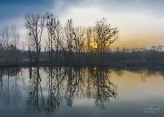 Reflections (rockheadz) Tags: grã¼n landscape landschaft landschaftsfotografie wasser rhein water fluss river baum goldenestunde goldenhour natur nature