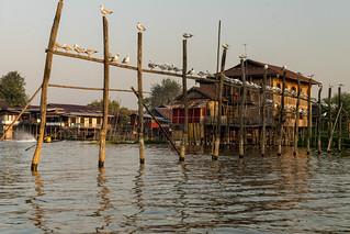 Lac Inlé Birmanie  /Myanmar_1070