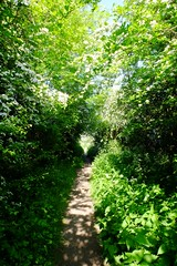 Getting overgrown (Lee M Wyatt) Tags: suttoninashfield ashfield nottinghamshire landscape nature may spring summer trees path green weeds