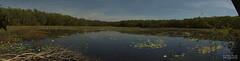 Goose Lagoon (Peedie68) Tags: northernterritory nt northern territory wildlife park australia water lagoon billabong lake lillies