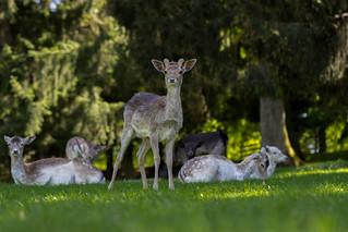 Wildpark Tambach