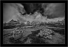 La Palma, Islas Canarias, Sony A7R IR, Voightländer Heliar Hyper Wide 10mm/5.6 (Bartonio) Tags: canaryislands clouds infrared ir islascanarias lapalma landscape llanodeljable modified nature nubes paisaje sonya7rir voightlander10mm56